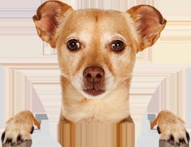стерелизация кошек и собак