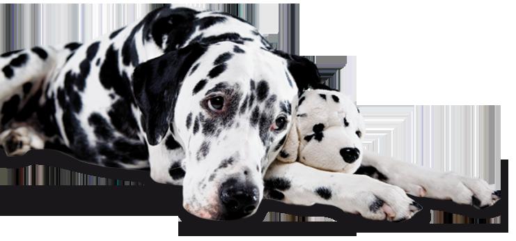родовспоможение собакам