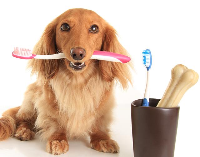 удаление зубного камня у кошек и собак