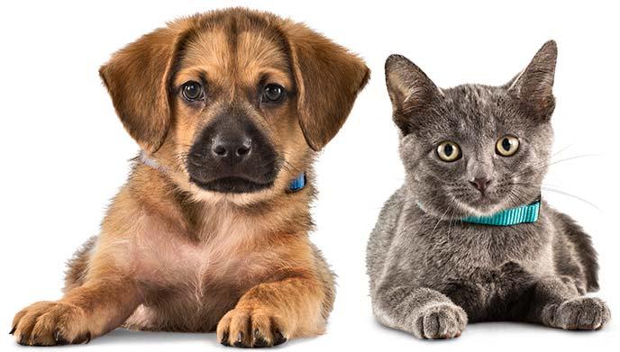 чистка ушей у животных